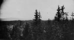 Utsikt granar o hässjor